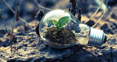ecologie economies